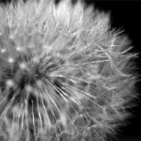 Campagna nazionale per lo screening del cancro al polmone
