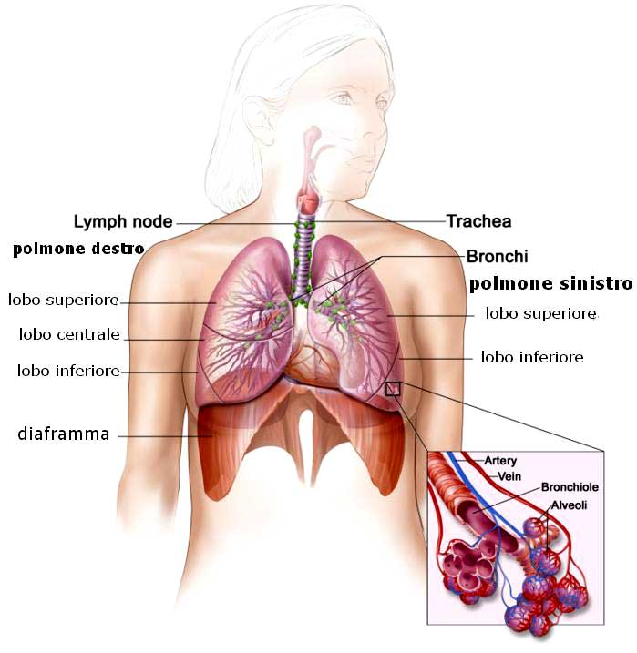 adenocarcinoma NSCLC